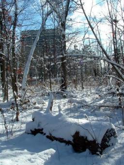 Le Fermilab sous la neige