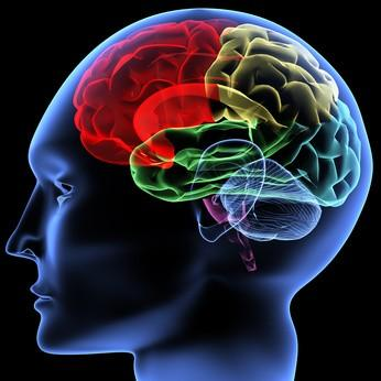 Le cerveau humain est à son maximum. Quel avenir alors ?