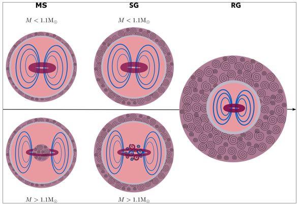 Vers une recherche systématique des champs magnétiques à l'intérieur des étoiles évoluées