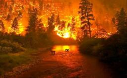 FORFIRE : Micromegas in the fight against forest fires.