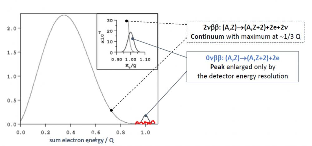 A new world leading limit for 0νββ decay set by the CUPID-Mo experiment to determine the nature of the neutrino