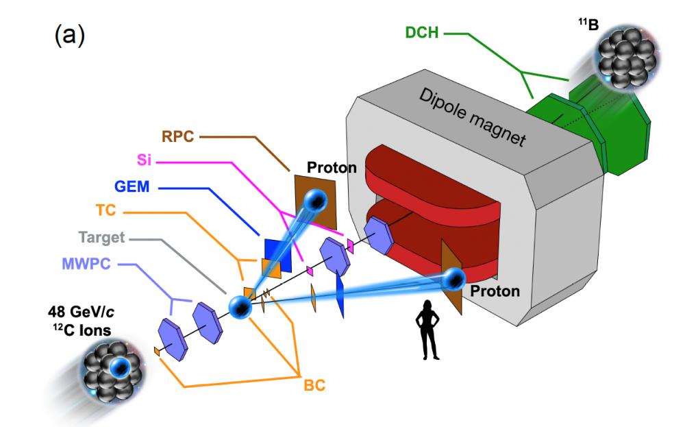 A glimpse of nuclear couple through transparent nuclei