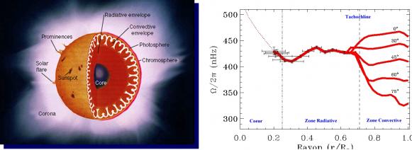 fig 2 : Profil de rotation solaire. La rotation différentielle est présente dans la région convective et devient rigide dans la région radiative.