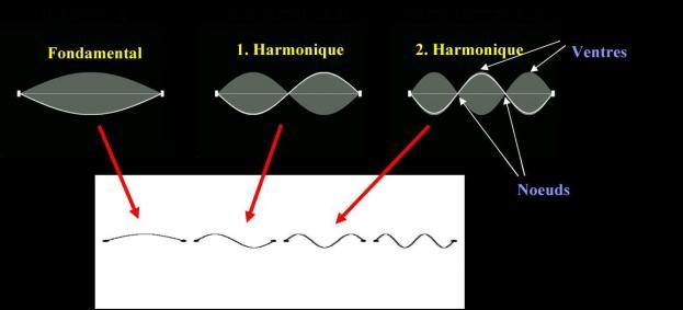 La sismologie : Qu'est-ce que c'est ? A quoi cela sert ?